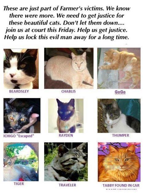justice-4-our-catz-3